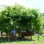 Gemütliches Schattenplätzchen in der Weinlaube