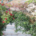 Rosenbogen - dahinter hätte Dornröschen schlagen können