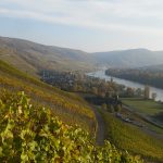 Blick über den Weinberg nach Bernkastel-Kues